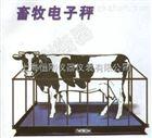 防水牲畜秤犊牛牲畜称重器,10吨犊牛称重器价格