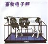 500公斤畜牧秤~特殊定制
